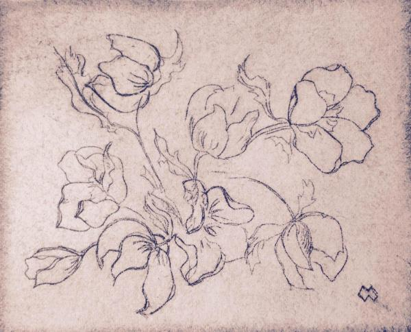 """Garden Series: *Hellebore blossoms dry-point 4""""x5"""""""