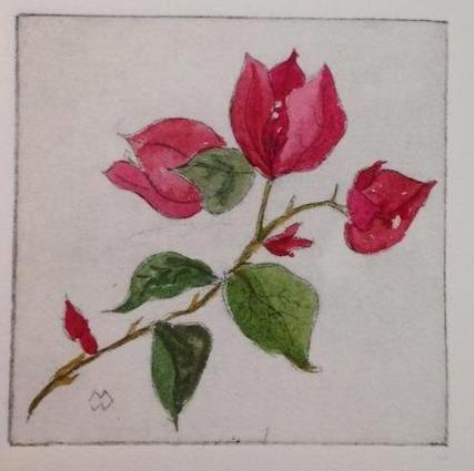 Nature's Valentine (Bougainvillea Twig)  drypoint