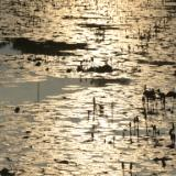 Reflections, Ayutthaya