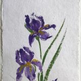 """28x20""""  Iris Pair"""