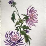 Purple Mums 28x20