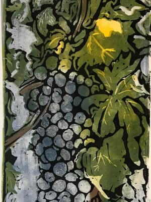 Chianti Grapes, Tuscan Vineyard
