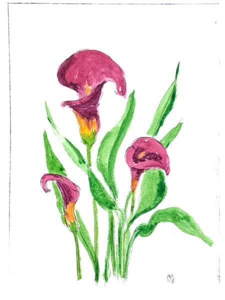 Garden Series: Calla Lily  drypoint