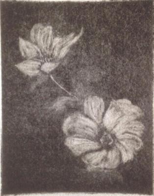 *Anemones (white), Mezzotint