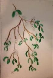 *Winter Series: Mistletoe  drypoint