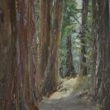 *Redwood Path, Strout Grove 12 x9