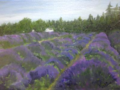 *Lavender Field: Sequim, Olympia Peninsula, WA.