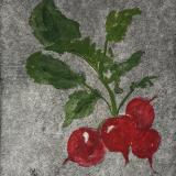 Garden Series: Radishes (dry point, hand colored watercolor)