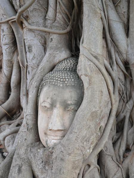 Rooted Buddha, Ayutthaya, Thailand